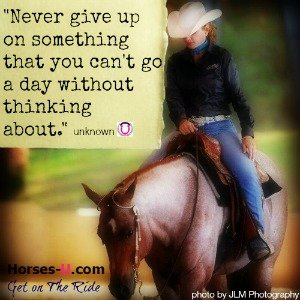 never give up-horses-u300x300