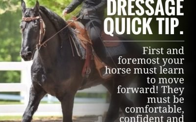 Western Dressage Quick Tip: Step One – Forward Movement