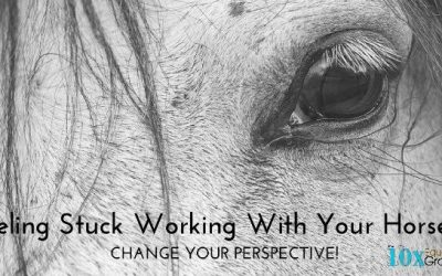 Feeling Stuck Working With Your Horse? Change Your Perspective!