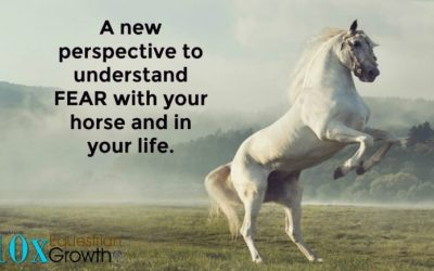 A new perspective to understand FEAR with your horse and in your life.
