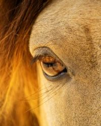 """You have """"control"""" over your horses feet, body, and face. What are you doing emotionally for your horse?"""